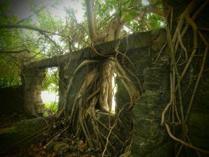 Tree - Matheson Hammock